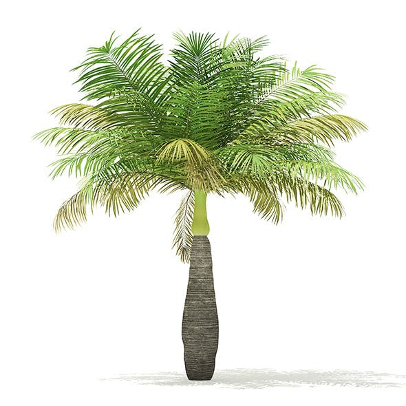Bottle Palm Tree 3D Model 3.6m - 3DOcean Item for Sale