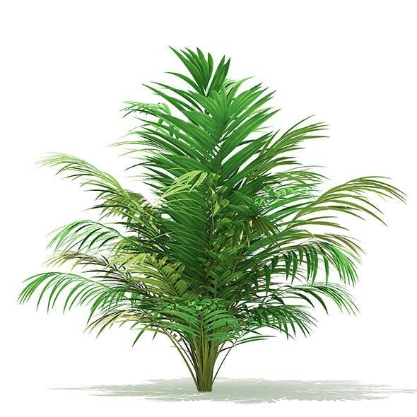 Golden Cane Palm Tree 3D Model 2.5m - 3DOcean Item for Sale