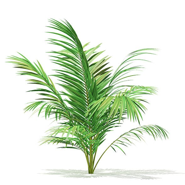 Golden Cane Palm Tree 3D Model 2.3m