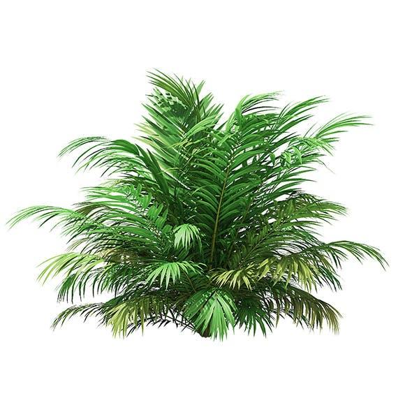 Golden Cane Palm Tree 3D Model 2.7m - 3DOcean Item for Sale