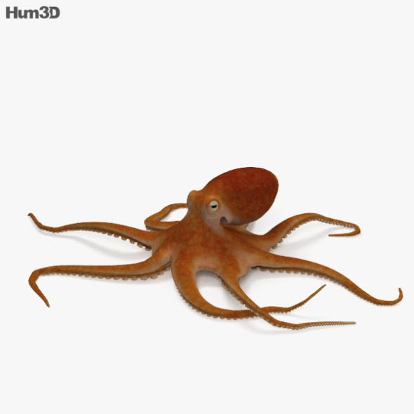 Common Octopus HD - 3DOcean Item for Sale