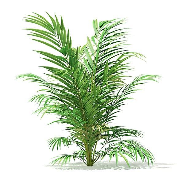 Golden Cane Palm Tree 3D Model 2.1m - 3DOcean Item for Sale