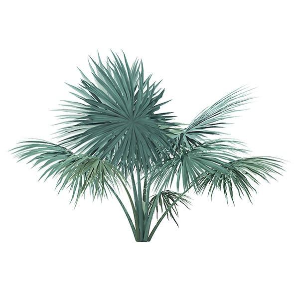 Silver Fan Palm Tree 3D Model 2m - 3DOcean Item for Sale