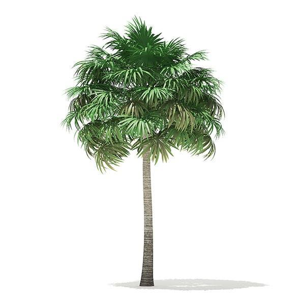Thatch Palm Tree 3D Model 10m