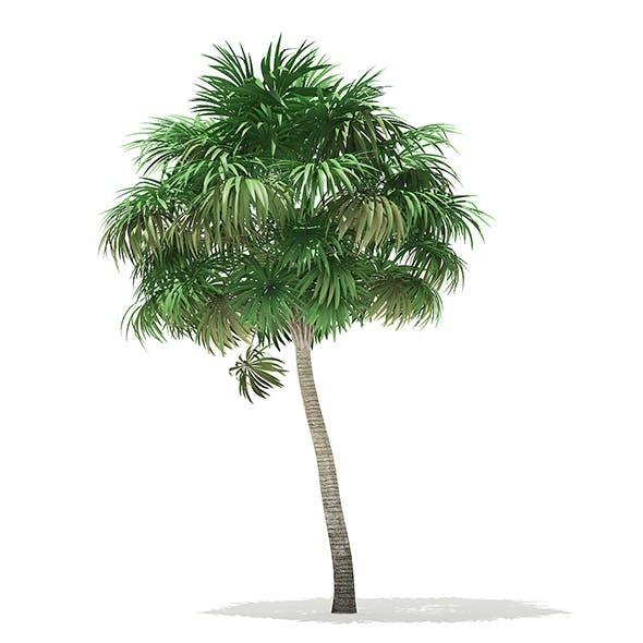 Thatch Palm Tree 3D Model 6.8m