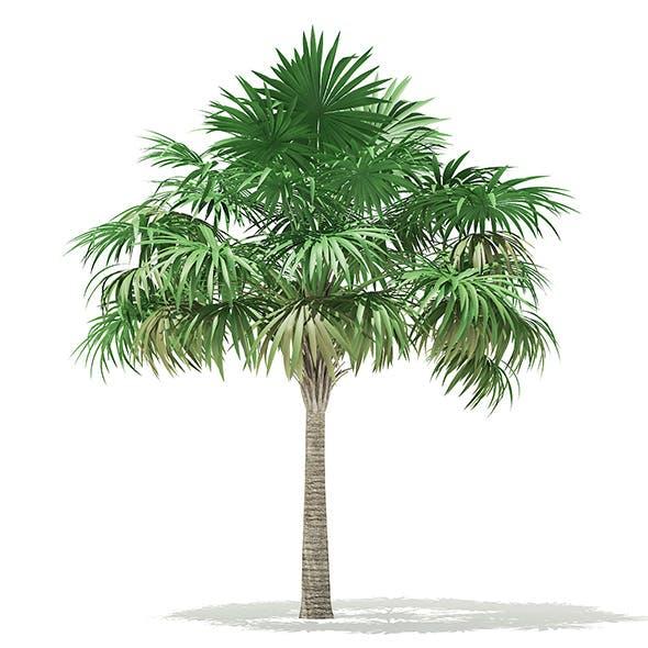 Thatch Palm Tree 3D Model 5.7m