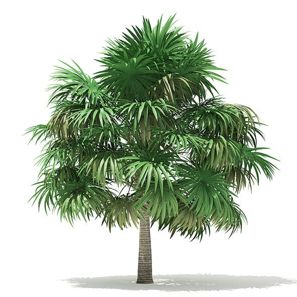 Thatch Palm Tree 3D Model 5m - 3DOcean Item for Sale