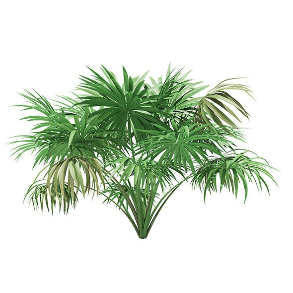 Thatch Palm Tree 3D Model 1.9m