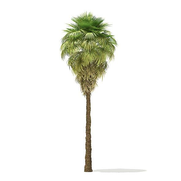 California Palm Tree 3D Model 9m - 3DOcean Item for Sale