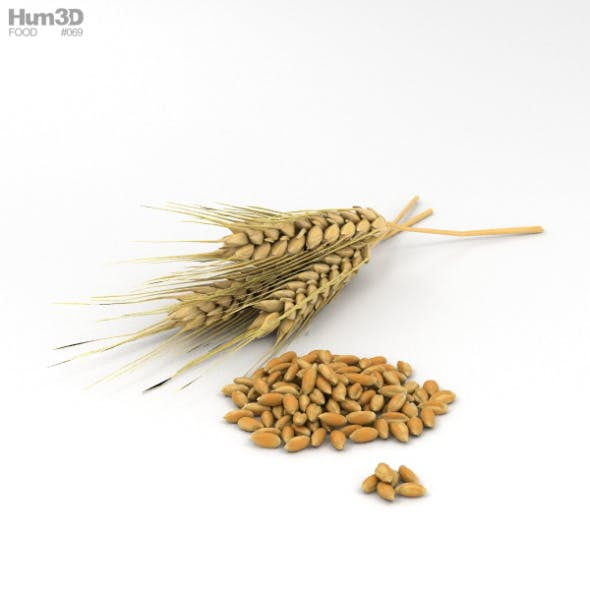 Wheat - 3DOcean Item for Sale