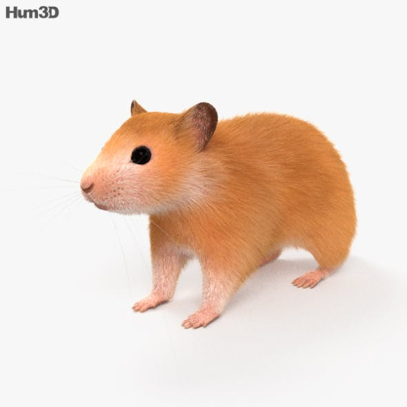 Hamster HD - 3DOcean Item for Sale