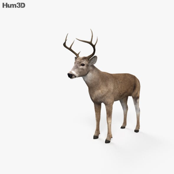 White-Tailed Deer HD - 3DOcean Item for Sale