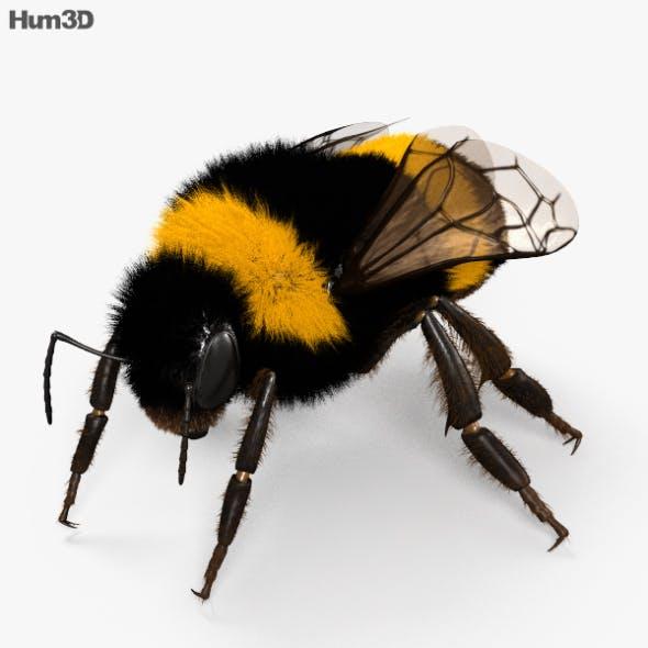 Bumblebee HD
