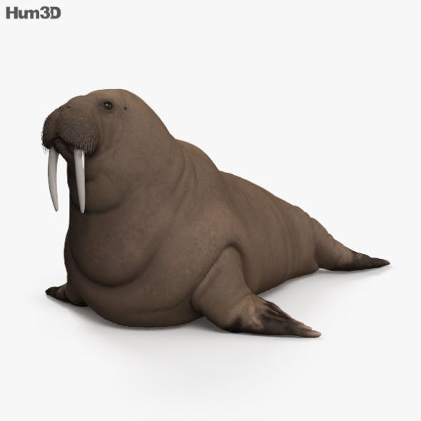 Walrus HD - 3DOcean Item for Sale