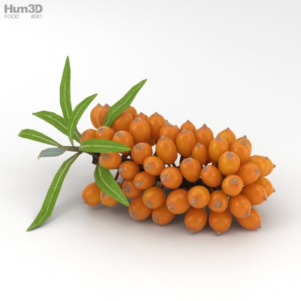 Hippophae - 3DOcean Item for Sale