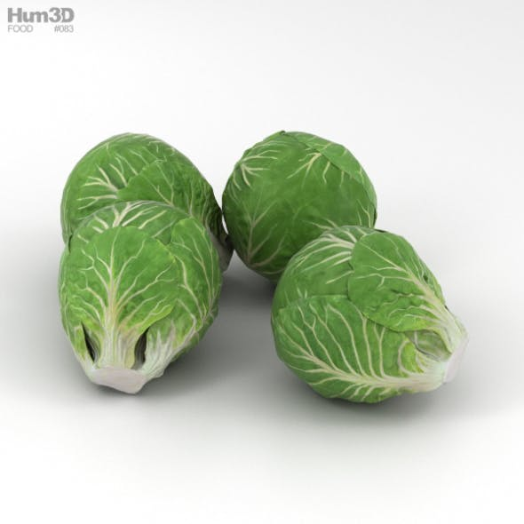 Brussels Sprout - 3DOcean Item for Sale