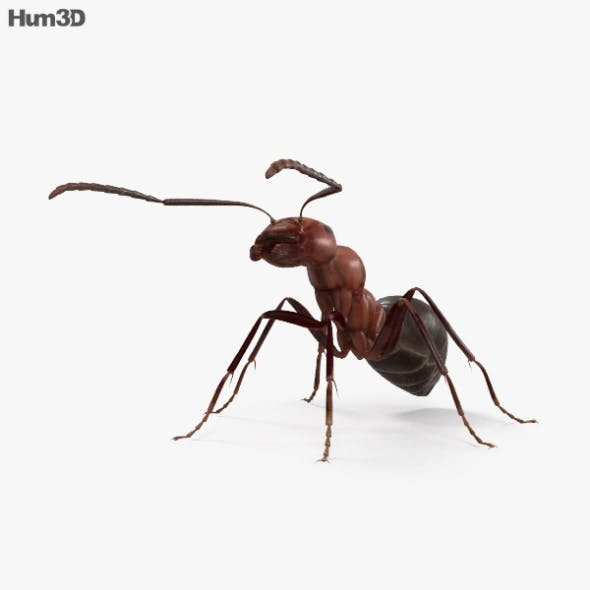 Ant HD - 3DOcean Item for Sale