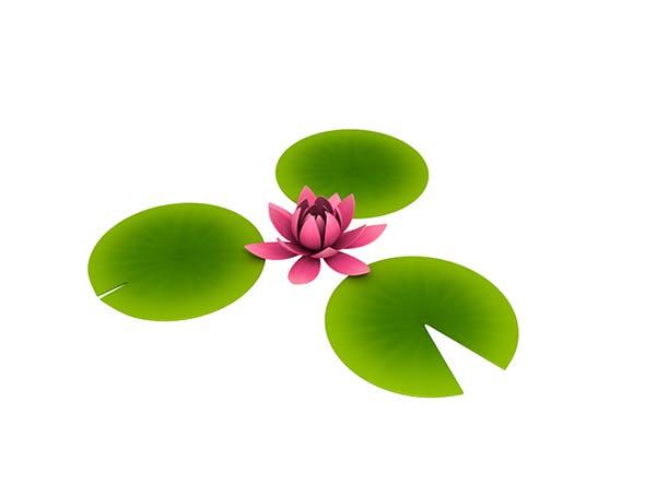 Lotus - 3DOcean Item for Sale