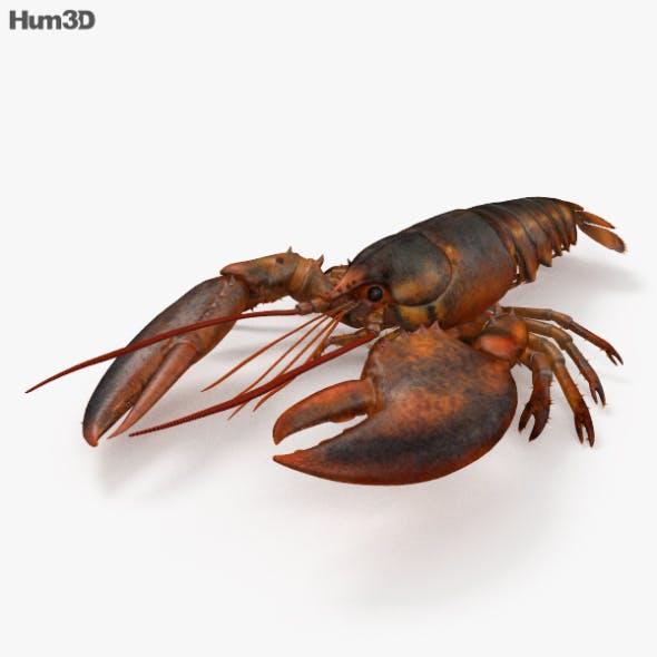 Lobster HD - 3DOcean Item for Sale