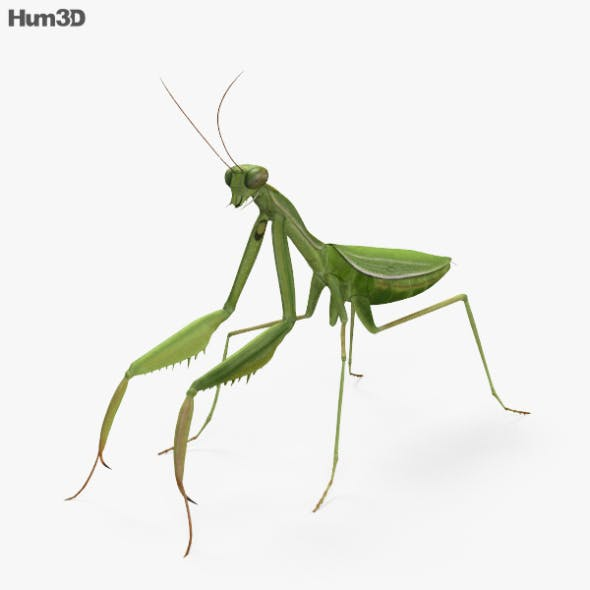 Mantis HD - 3DOcean Item for Sale