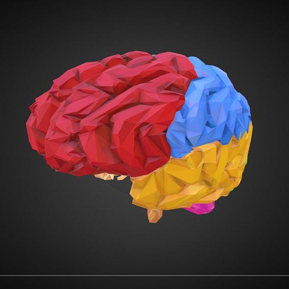 brain_color_2