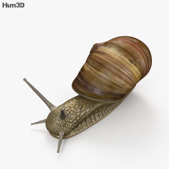 Snail HD - 3DOcean Item for Sale