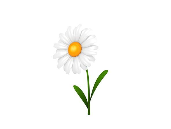 Daisy - 3DOcean Item for Sale