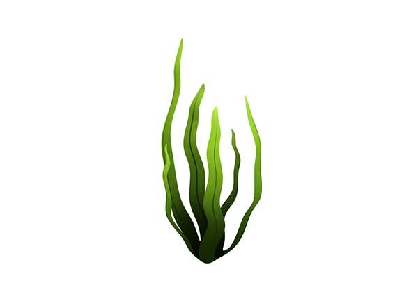 Seaweed - 3DOcean Item for Sale