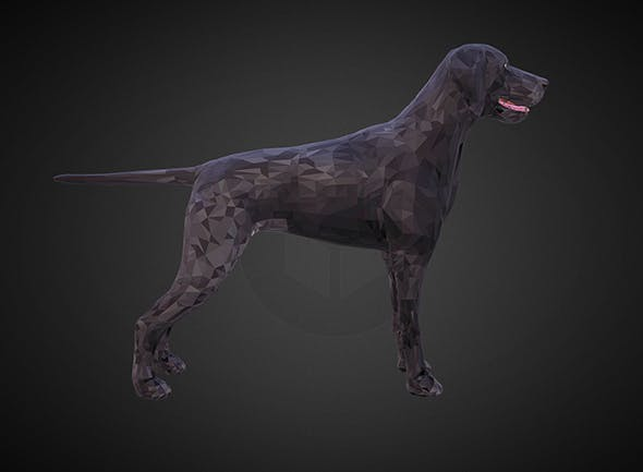 dog kurtshaar black - 3DOcean Item for Sale