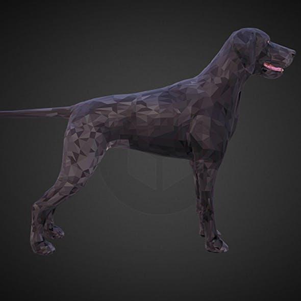 dog kurtshaar black