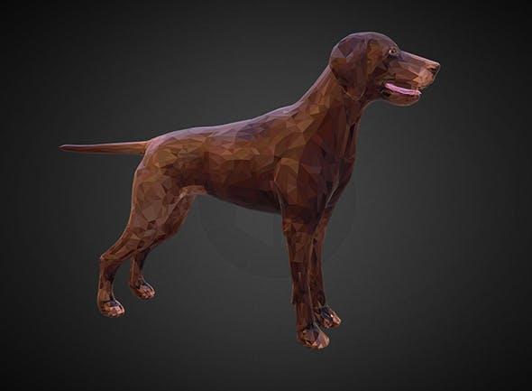 dog kurtshaar brown - 3DOcean Item for Sale