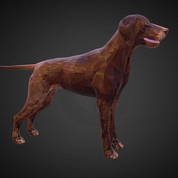 dog kurtshaar brown
