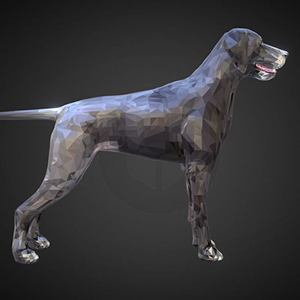 dog kurtshaar grey