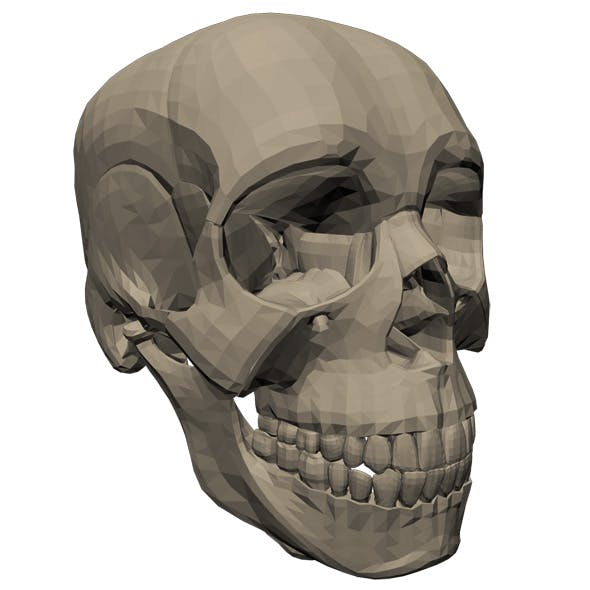 Scull - 3DOcean Item for Sale