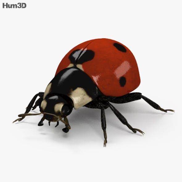 Ladybird HD - 3DOcean Item for Sale