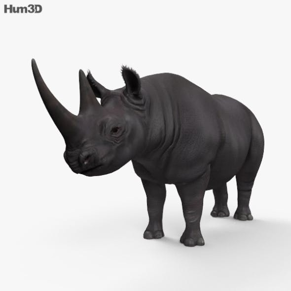 Black Rhinoceros HD