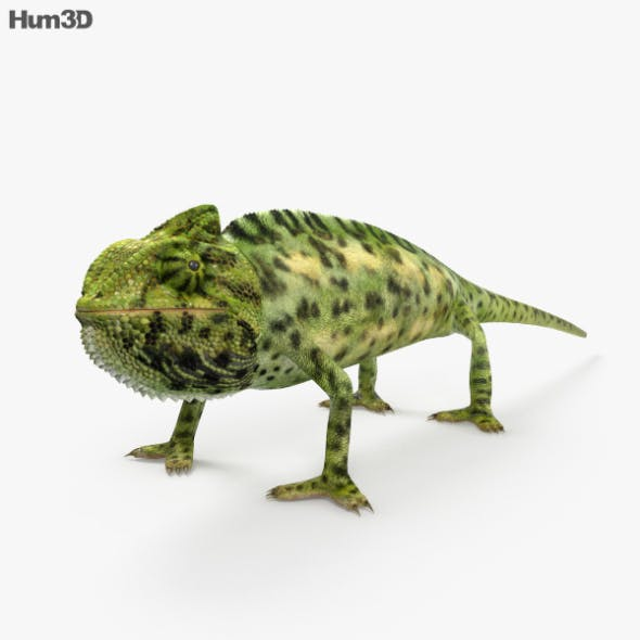 Veiled Chameleon HD - 3DOcean Item for Sale