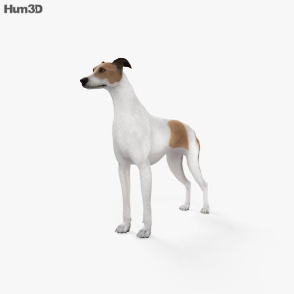 Greyhound HD - 3DOcean Item for Sale