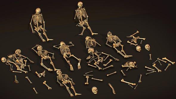 remains skeleton bone big pack 3d model - 3DOcean Item for Sale