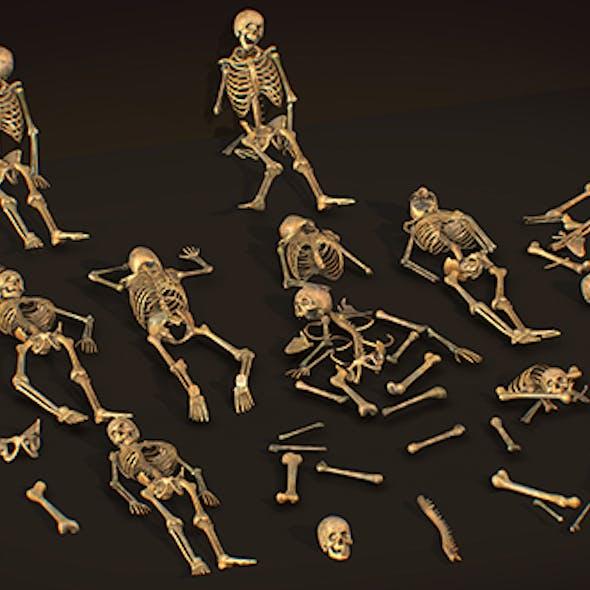 remains skeleton bone big pack 3d model