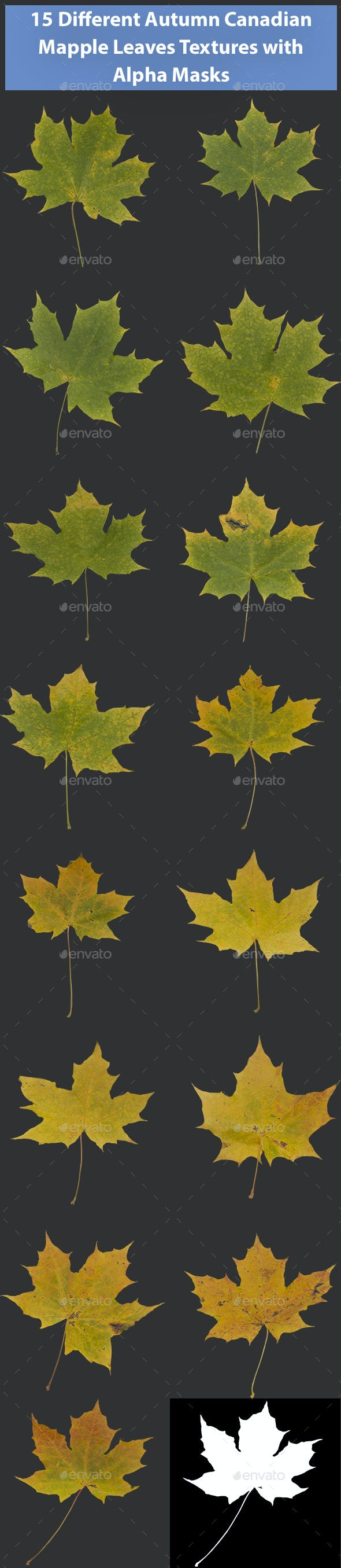 15 Different Canadian Mapple Leaves Textures - 3DOcean Item for Sale