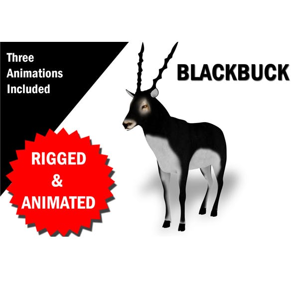 3D Blackbuck RIgged and Animated