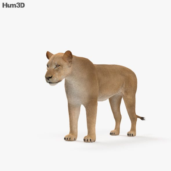 Lioness HD - 3DOcean Item for Sale