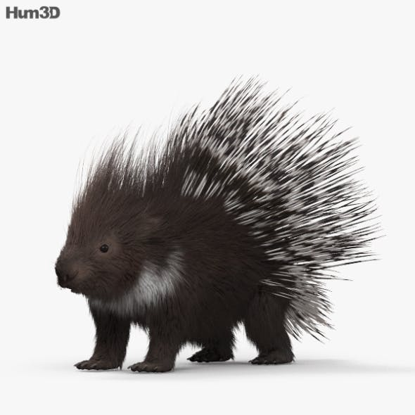 Porcupine HD - 3DOcean Item for Sale