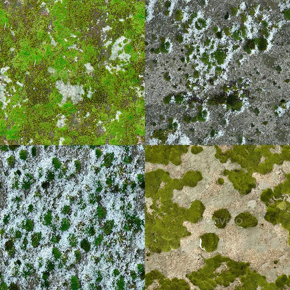 Set of 18 Seamless Mossy Surfaces Textures Volume 2
