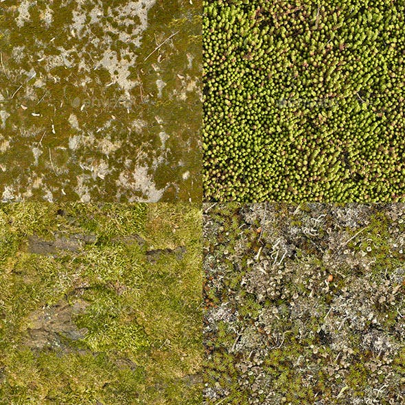 Set of 18 Seamless Mossy Surfaces Textures Volume 3