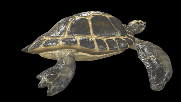 Turtle - 3DOcean Item for Sale