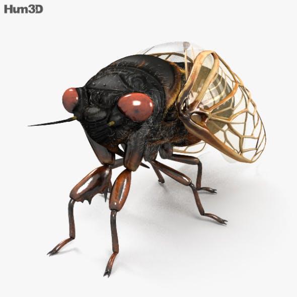 Cicada HD - 3DOcean Item for Sale
