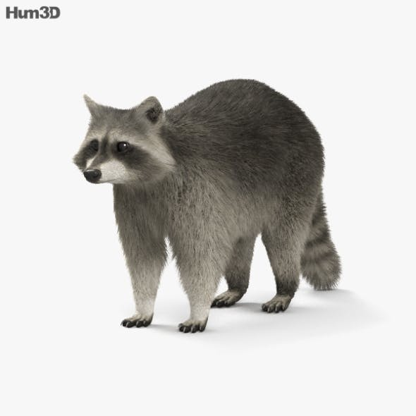 Raccoon HD