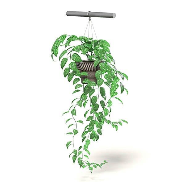 Hanging Plant 3D Model - 3DOcean Item for Sale